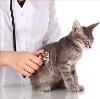 Ветеринарные клиники в Вышнем Волочке